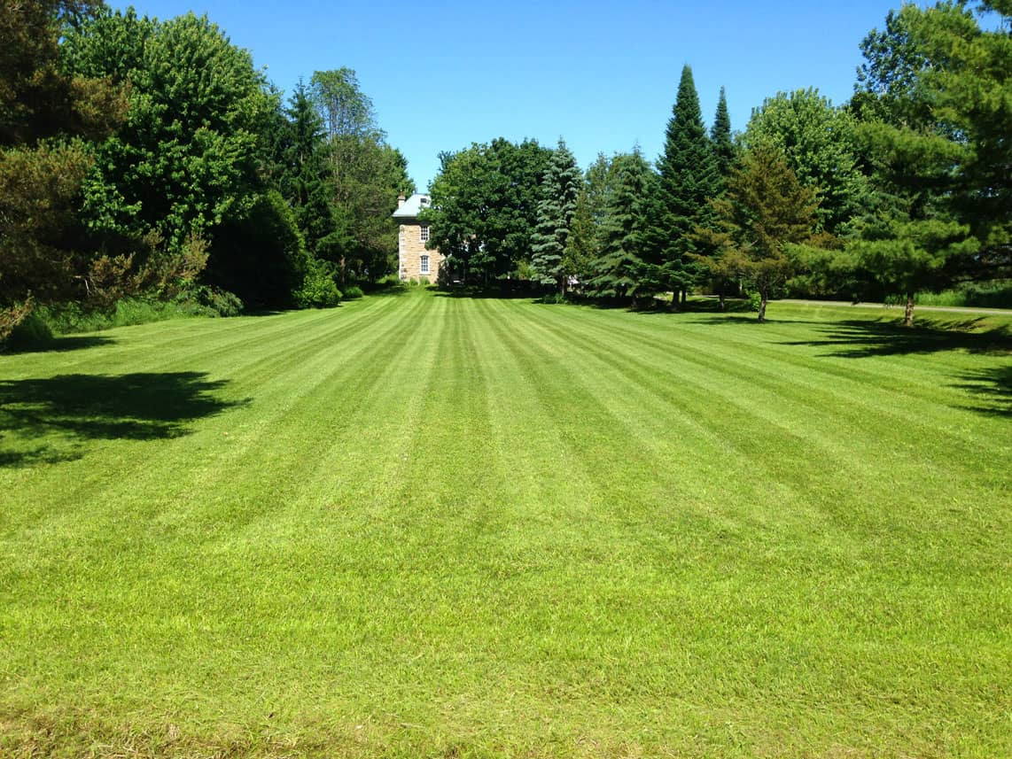 large backyard with lawn