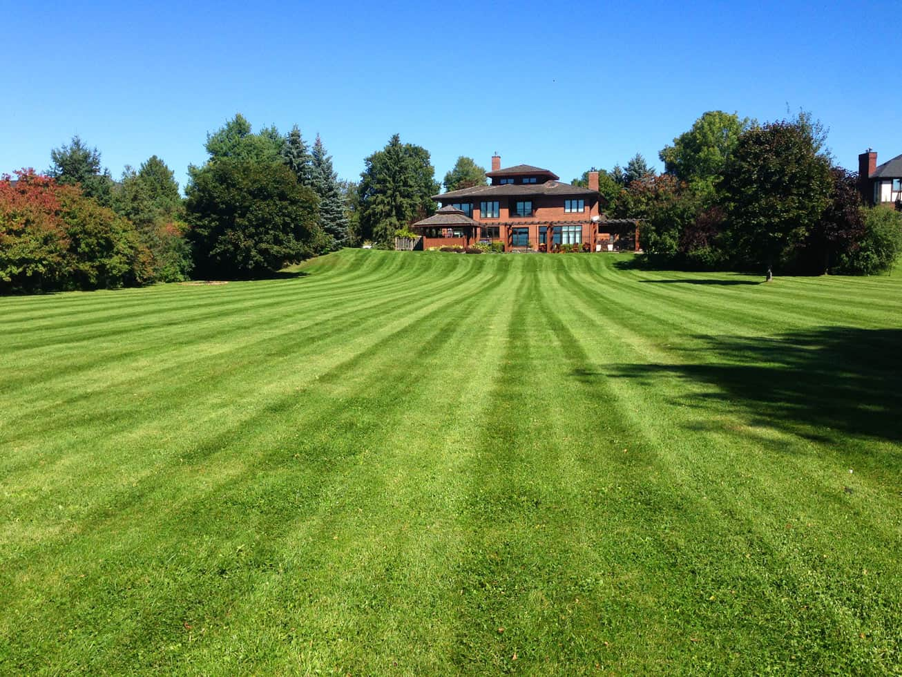 lawn infront of house large