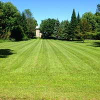 large mowed lawn