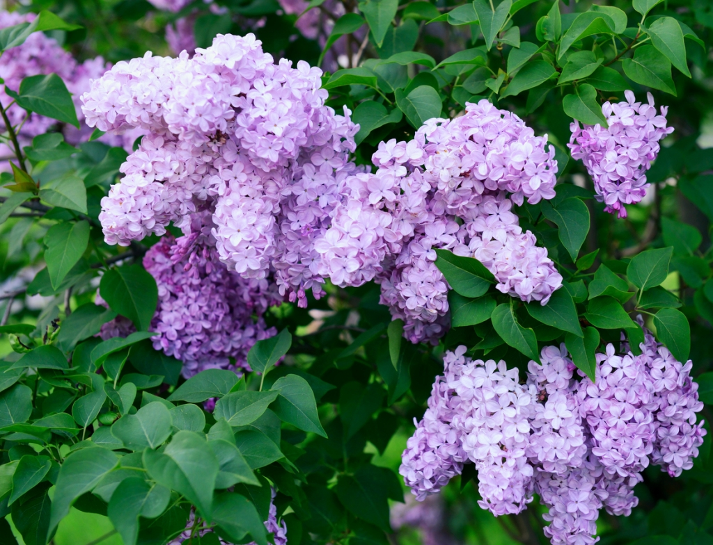 Spring Flowers Lets Get Planting Neighborscape