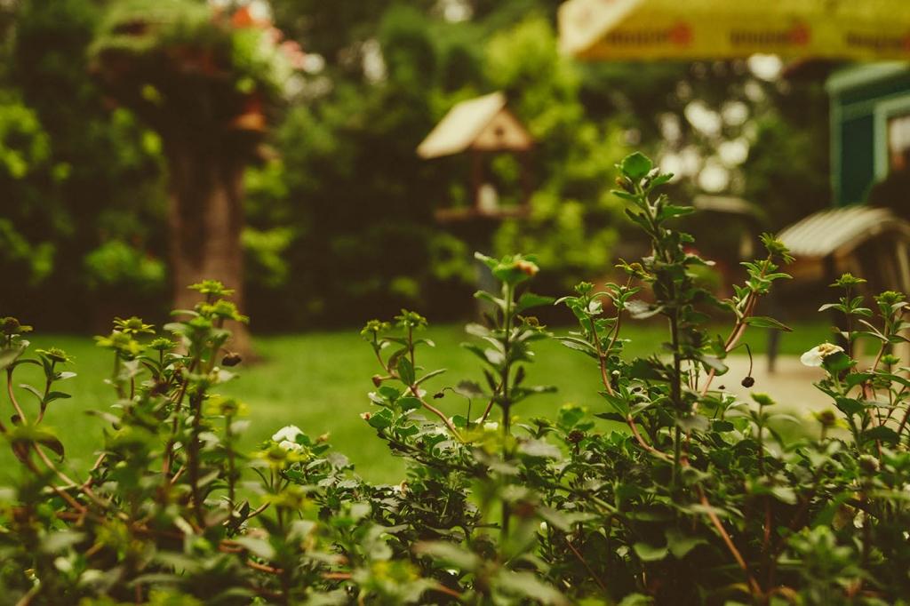 Building a Deck: Garden