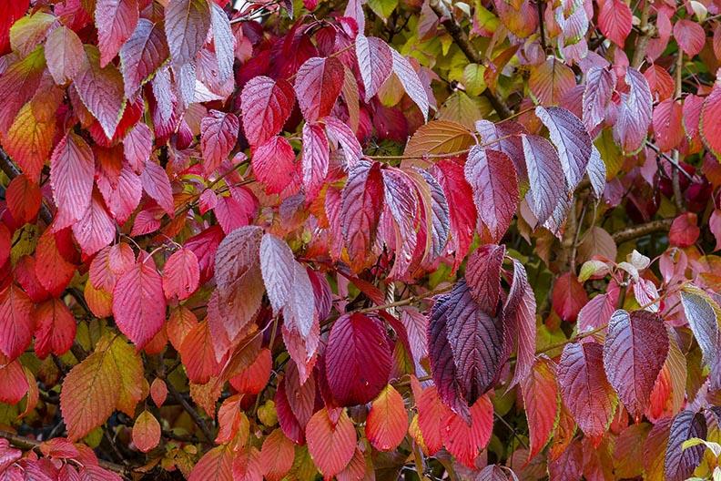 fall trees - dogwood