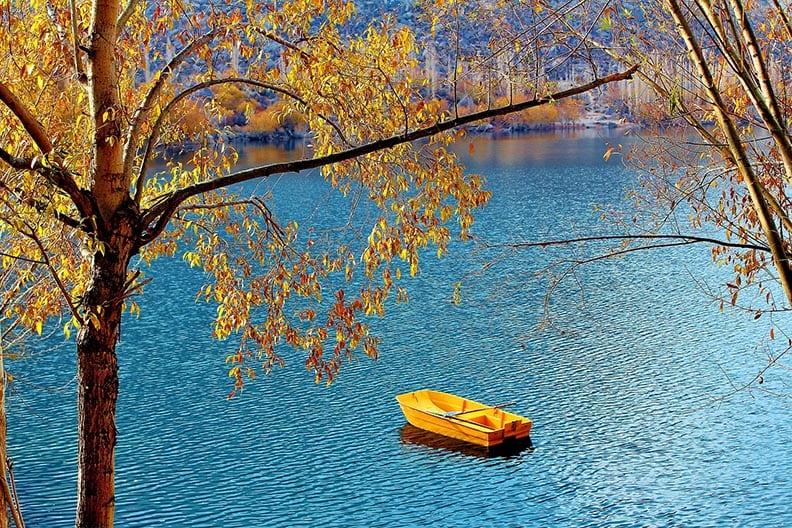 fall trees - katsura